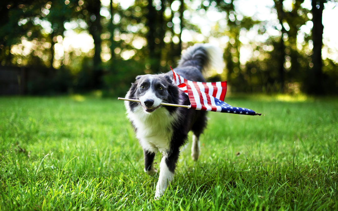 How To Keep Your Dog Safe During Fourth Of July Celebrations