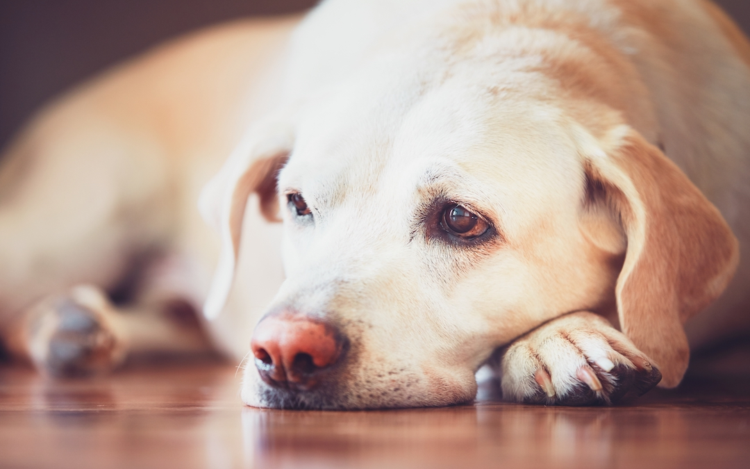 4 Signs Your Dog is Bored & How To Help