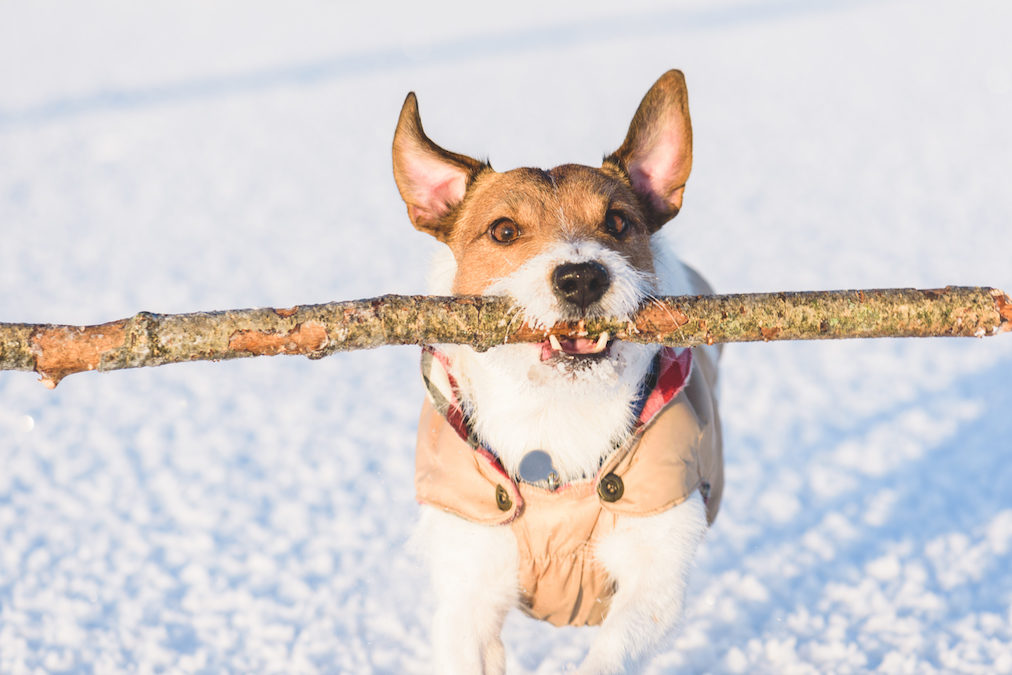 6 Ways To Make Sure Your Dog Is Ready For The Winter Season